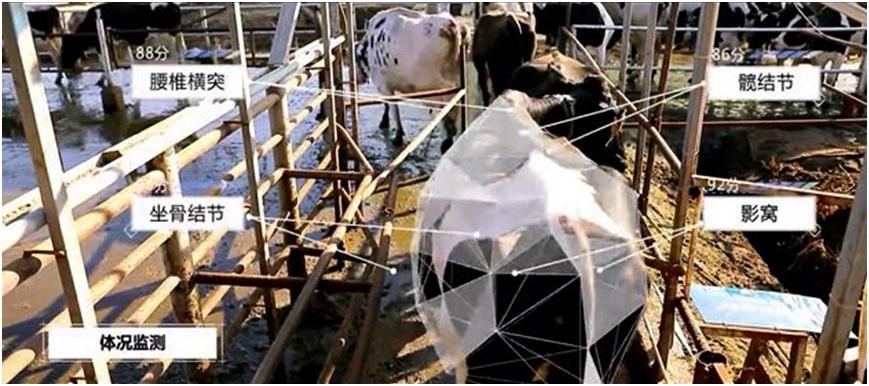 数字科技助力养殖业复工 京东数科AI养牛促安全生产