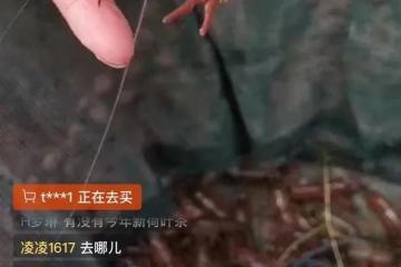 阿里巴巴:由盒马事业群等牵头从湖北采购价值10亿元的小龙虾