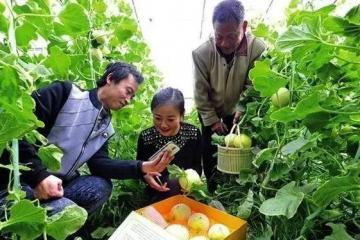 关于农产品上行,京东阿里都有新动作